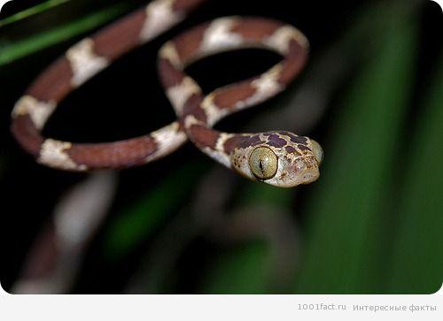 про змею