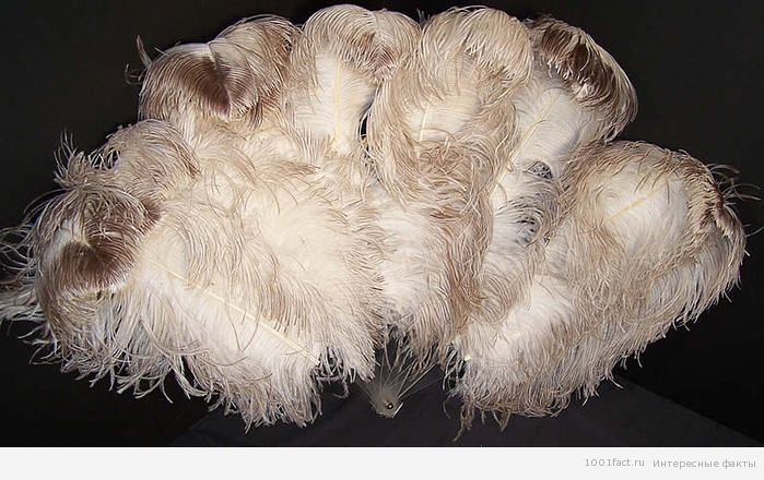 перья страуса