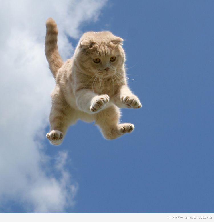 кошка в прыжке