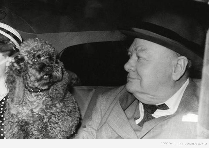 вклад в историю_Черчилль