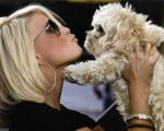 факты о собаках знаменитостей