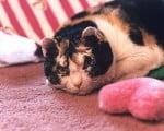 факты о Кошке Века
