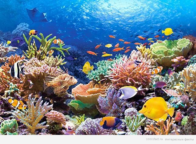 флора и фауна Красного моря