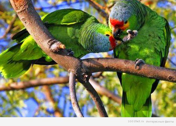 попугаи на дереве