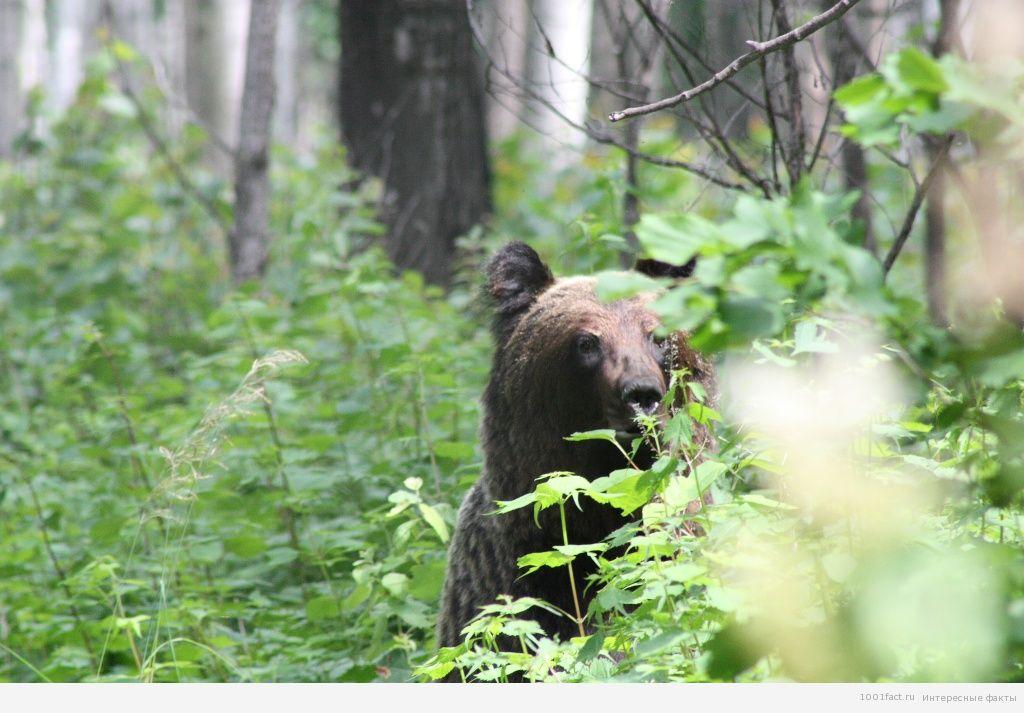 в лесу_Хехцир