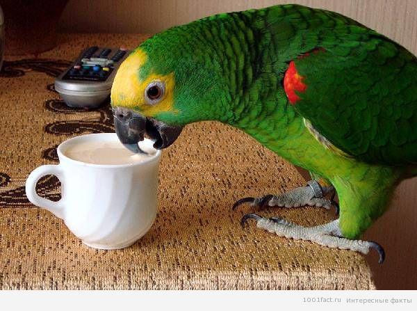 попугай в домашних условиях
