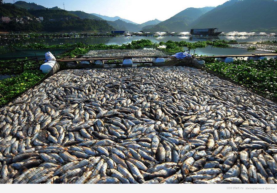 обилие рыбы в реке