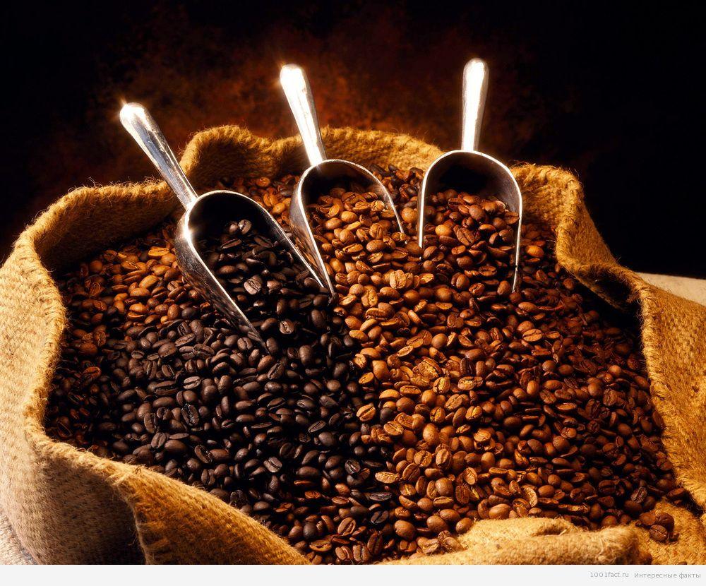 дорогой сорт кофе