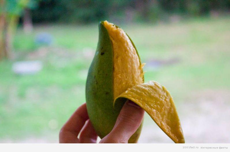 про манго