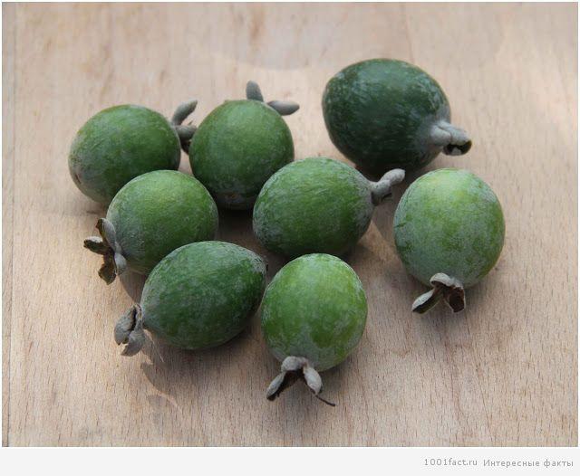 про еду_тропический фрукт фейхоа