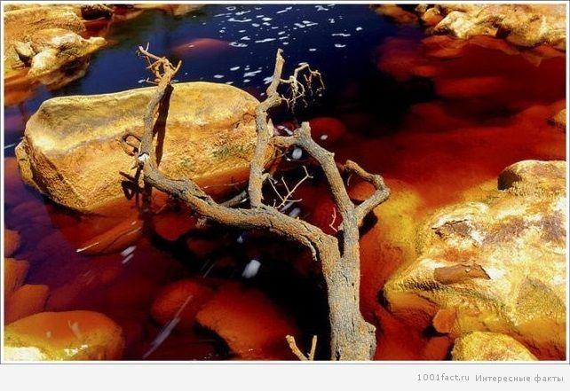 """""""Красная река"""""""