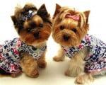 разные и красивые собаки