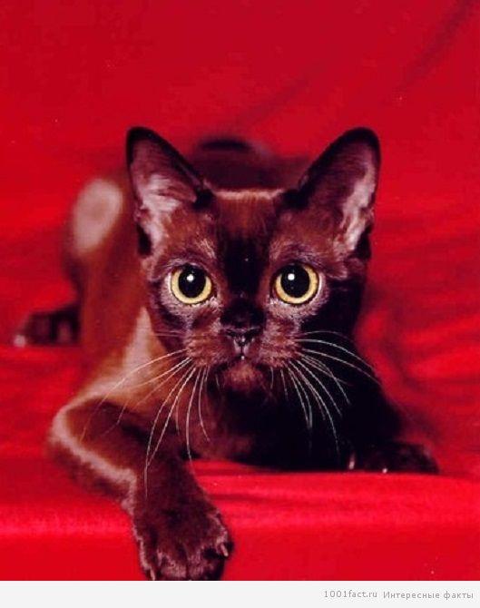 красота кошки