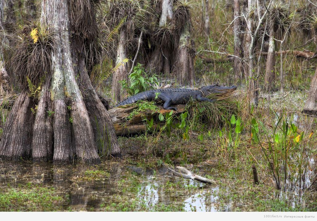 опасность на болотах