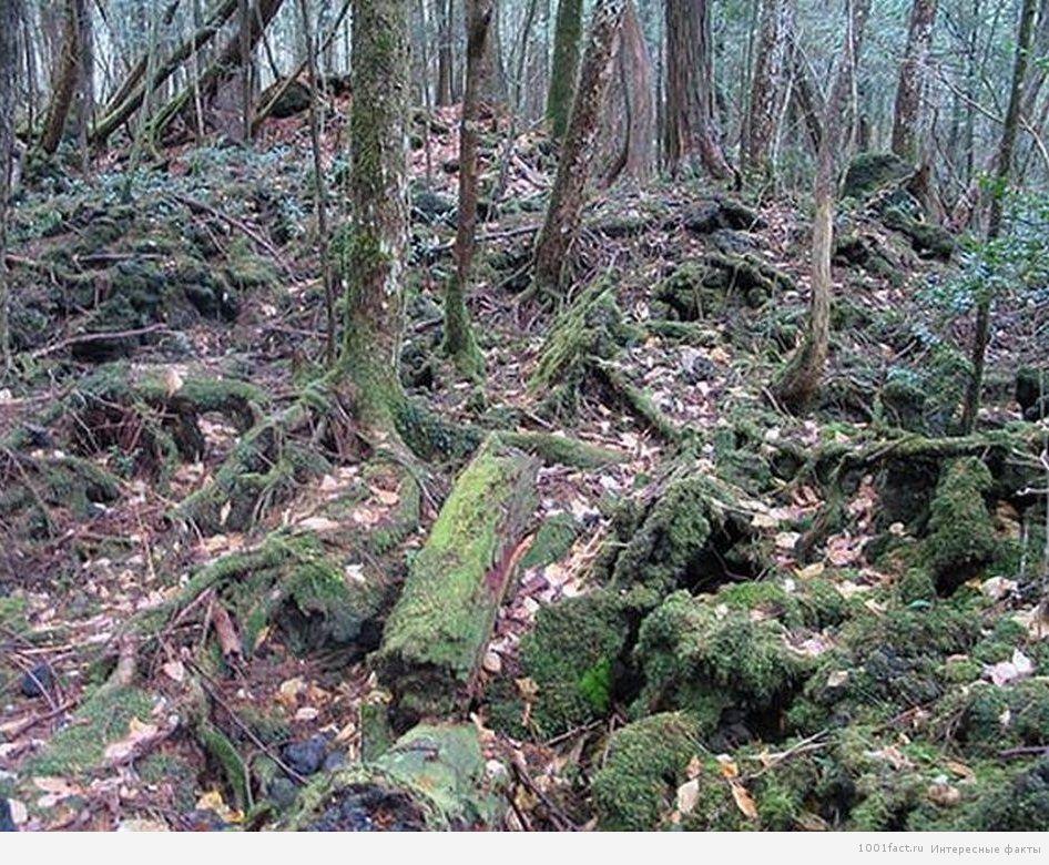 Равнина зеленых деревьев Аокигахара