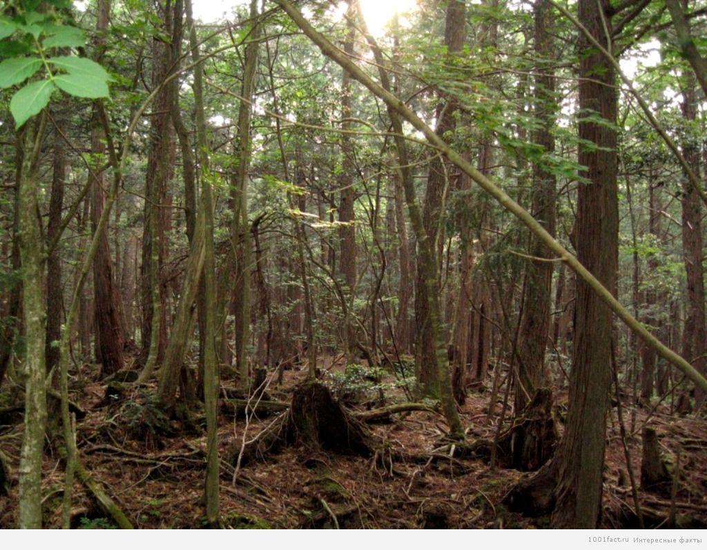 про загадочный лес