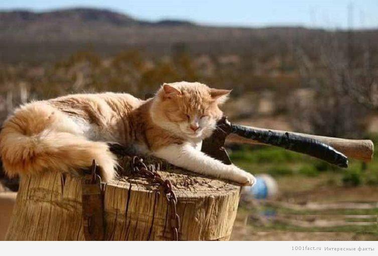 кошка на природе спит
