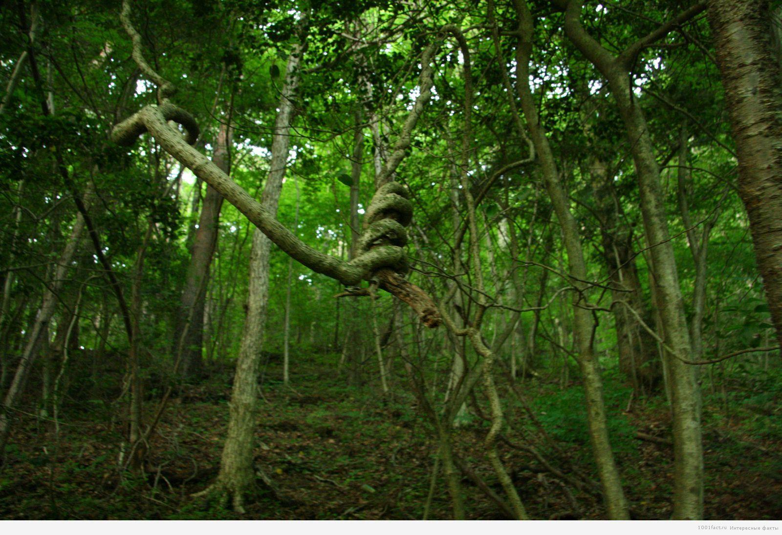 лес_Япония