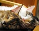 факты о сне  кошек