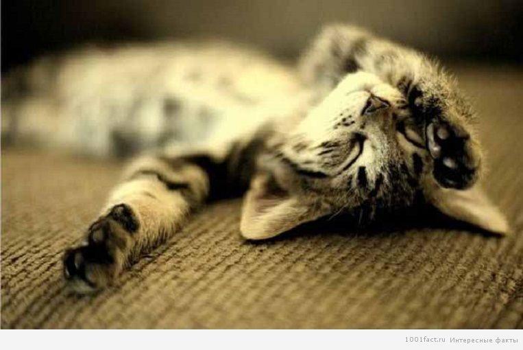 разные позы сна