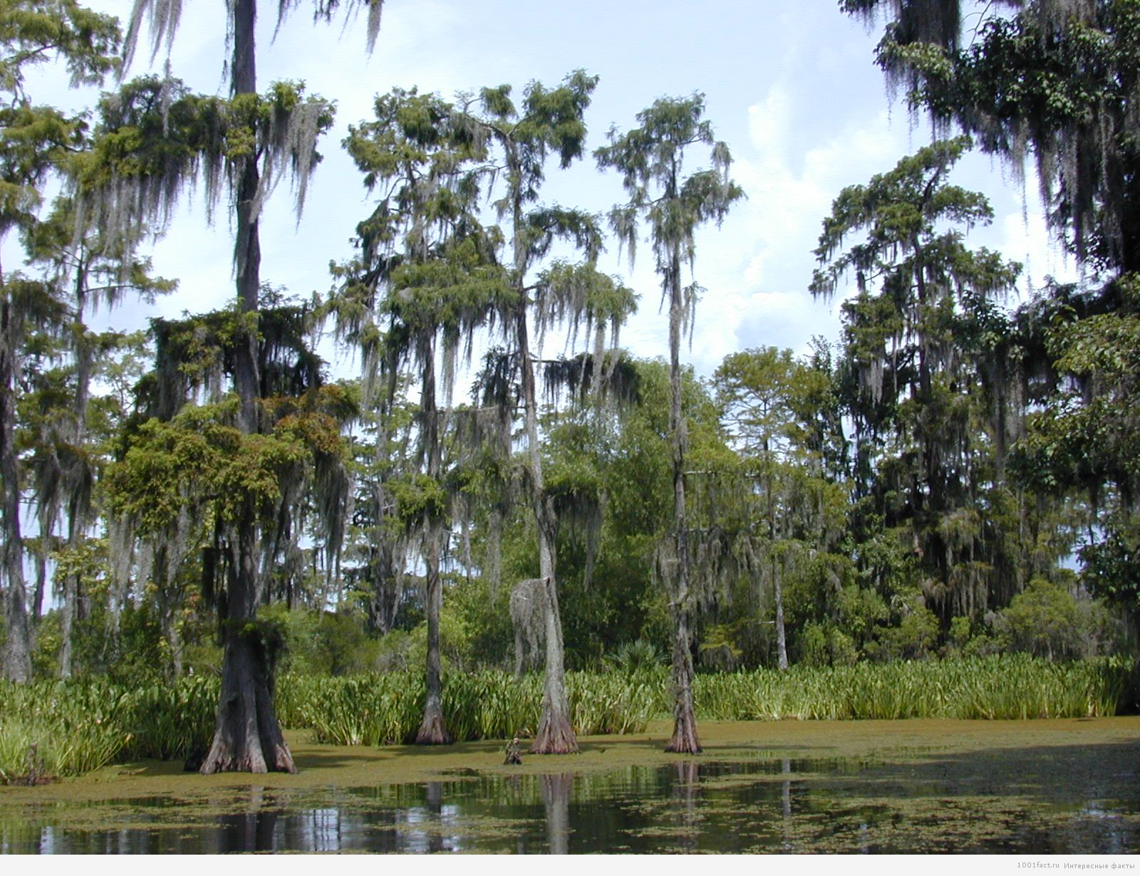 болота в Луизиане