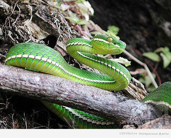 остров змей_факты