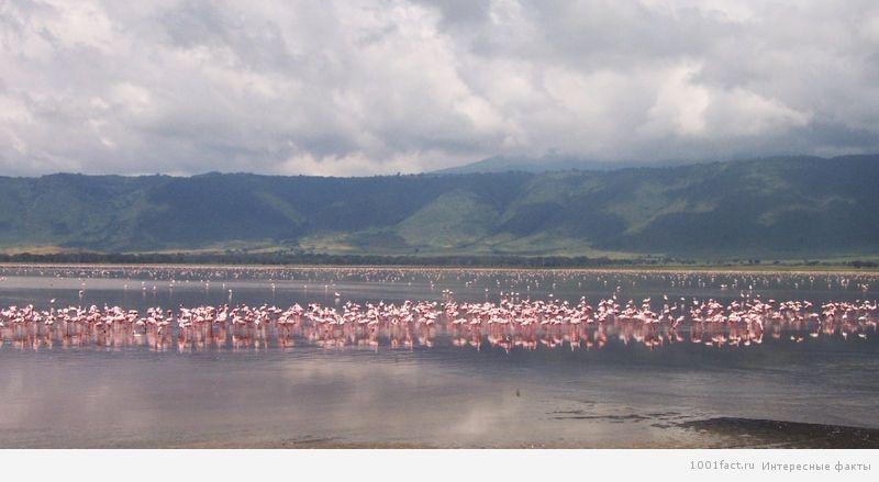 озеро_фламинго