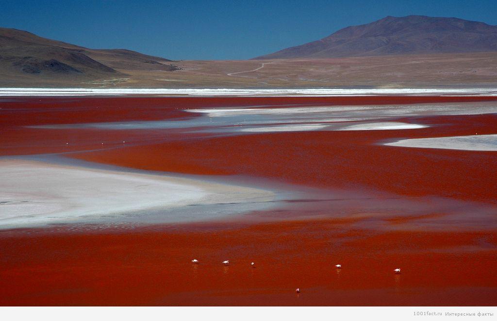 о Малиновом озере