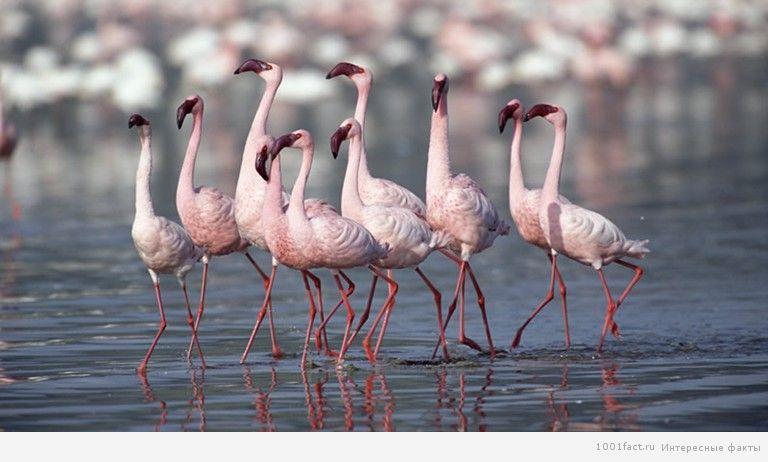 розовый цвет фламинго