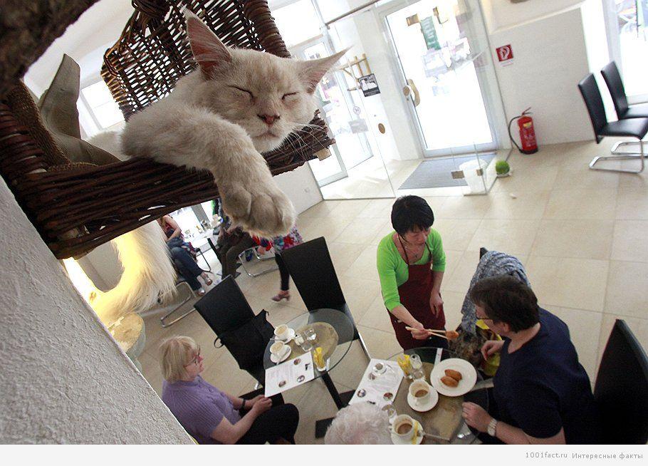 кошки и кафе