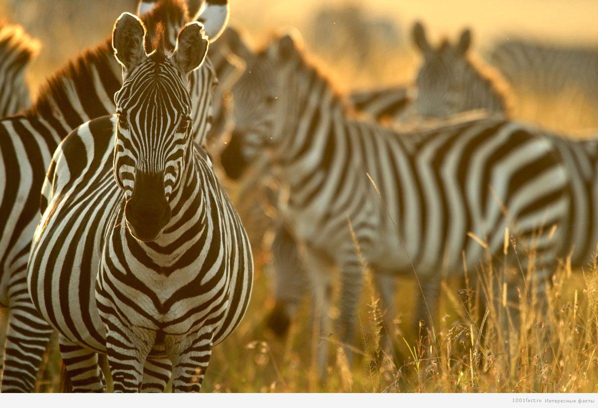 животный мир Кении