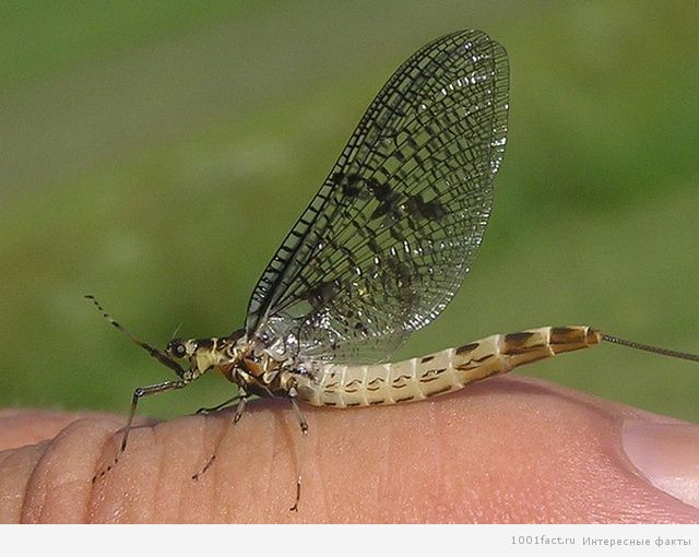 необычный вид бабочки