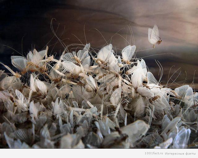 рождение бабочек