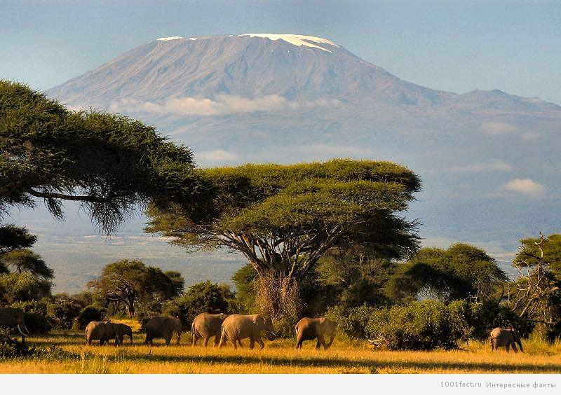 парк Найроби