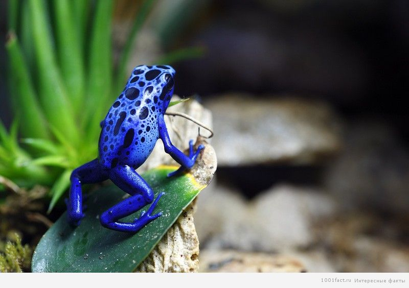 животные в лесах Амазонки