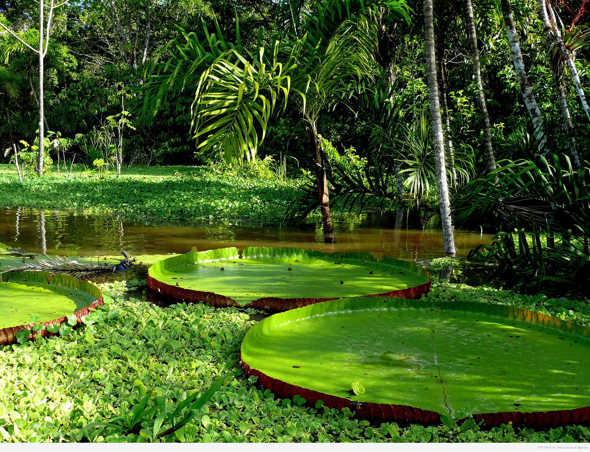 тропики_Амазонка