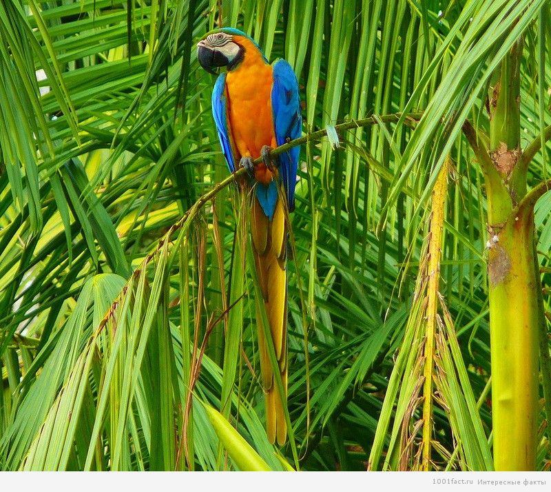 попугай в лесах Амазонки