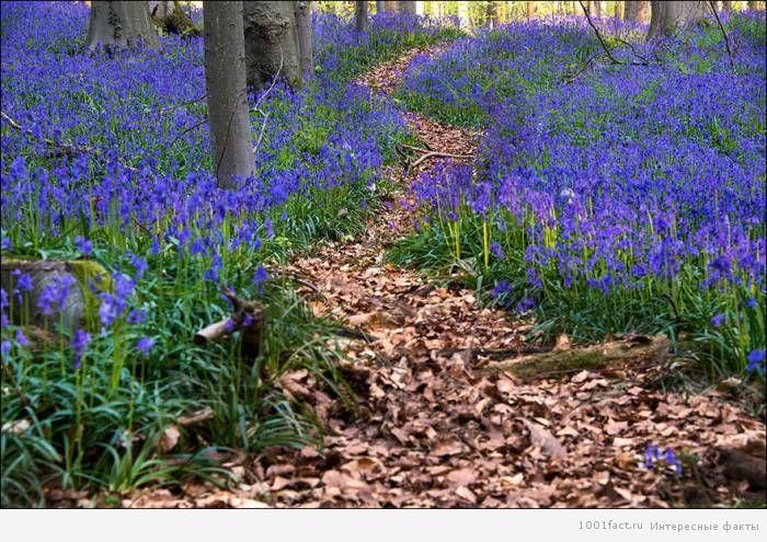 удивительный лес Халлербос
