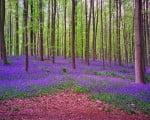 красота леса