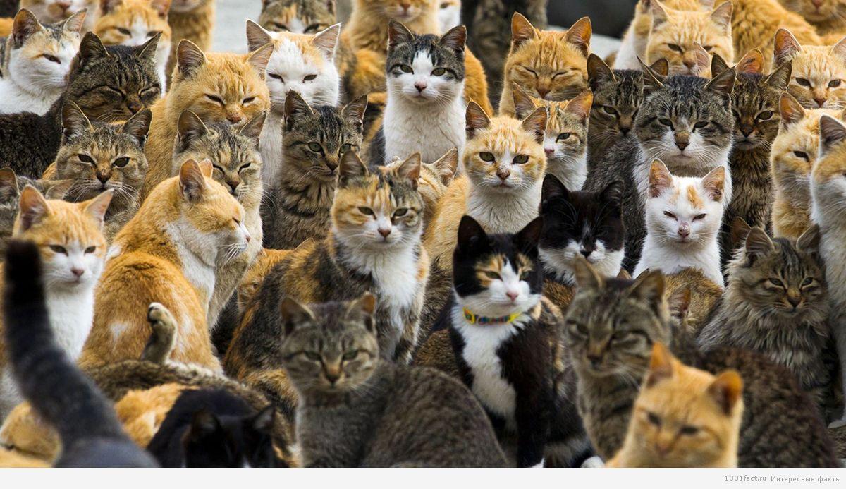 много кошек