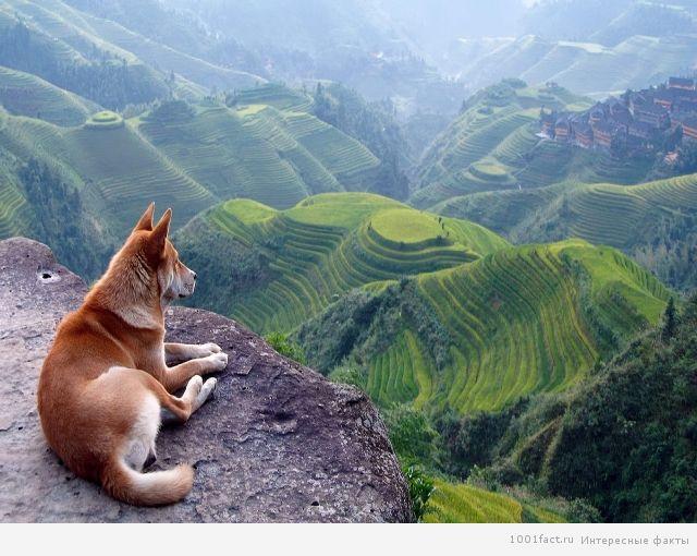 проживание собак