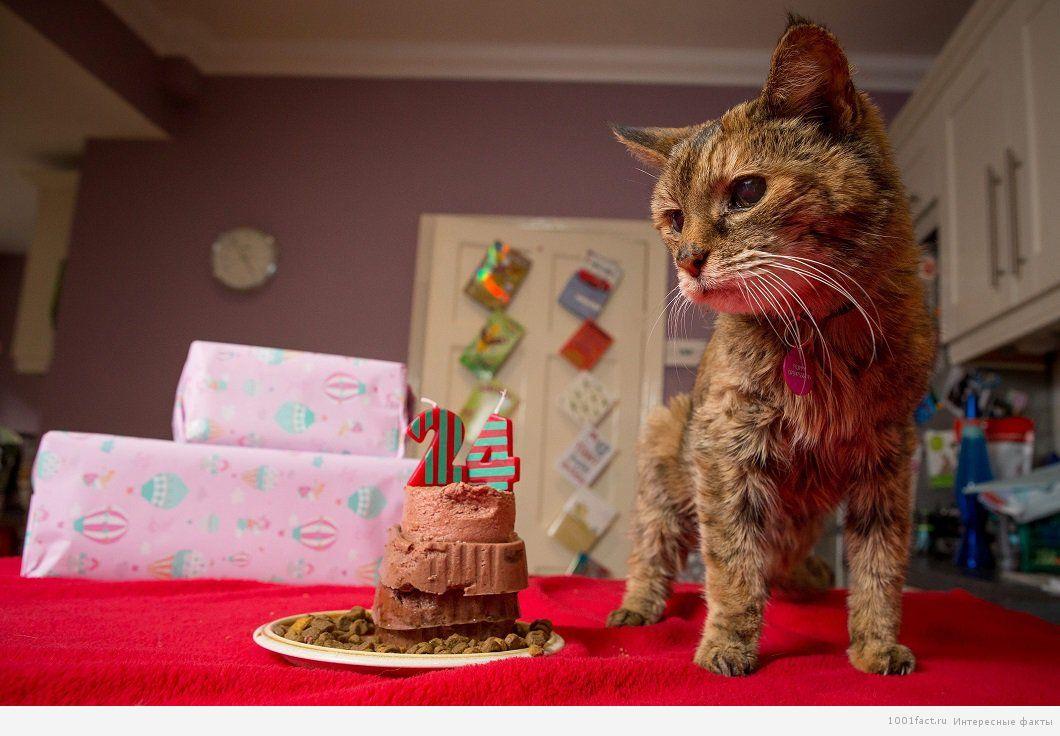 кошка долгожитель