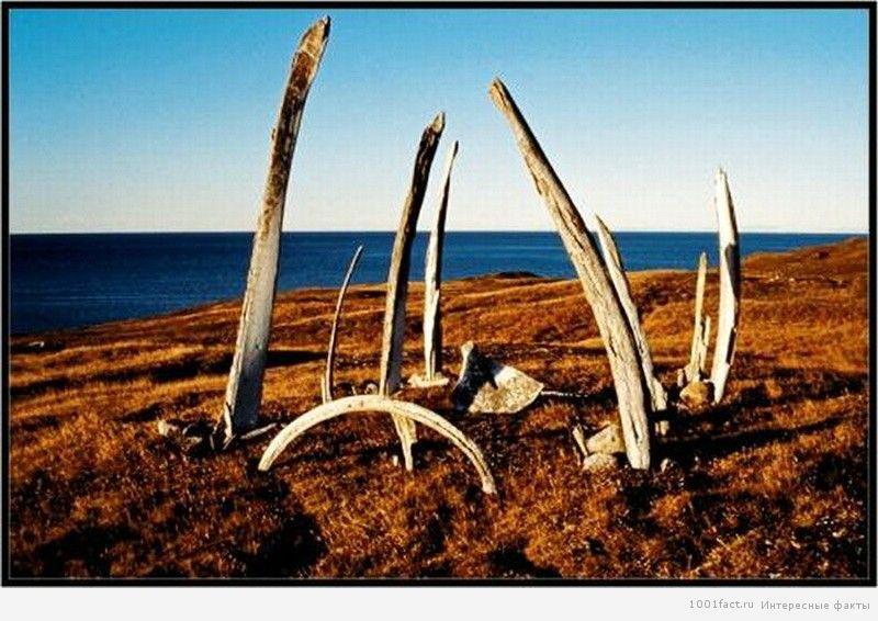 кости древние