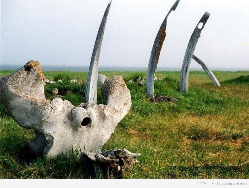 кости китов