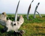 факты о Китовой аллее