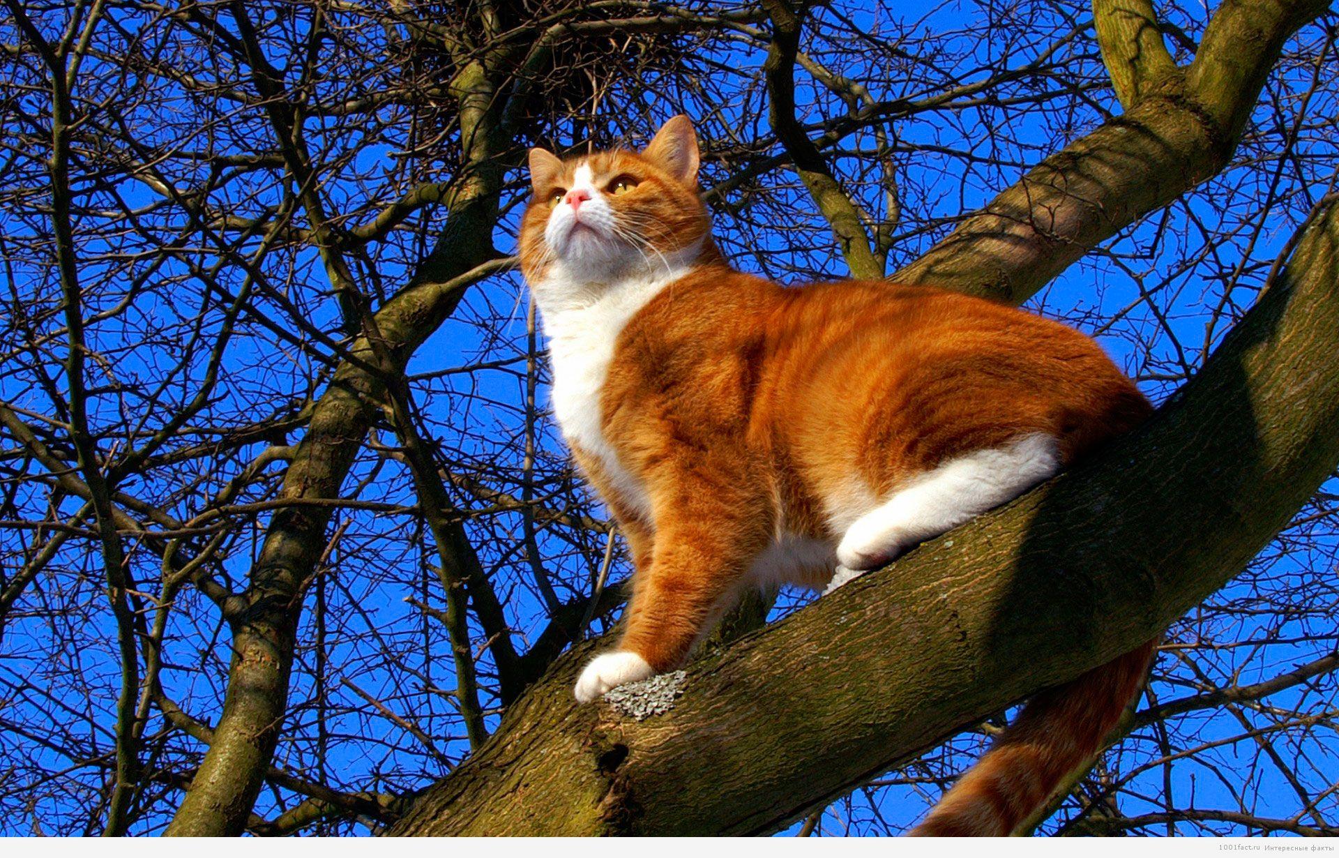 кошка и дерево