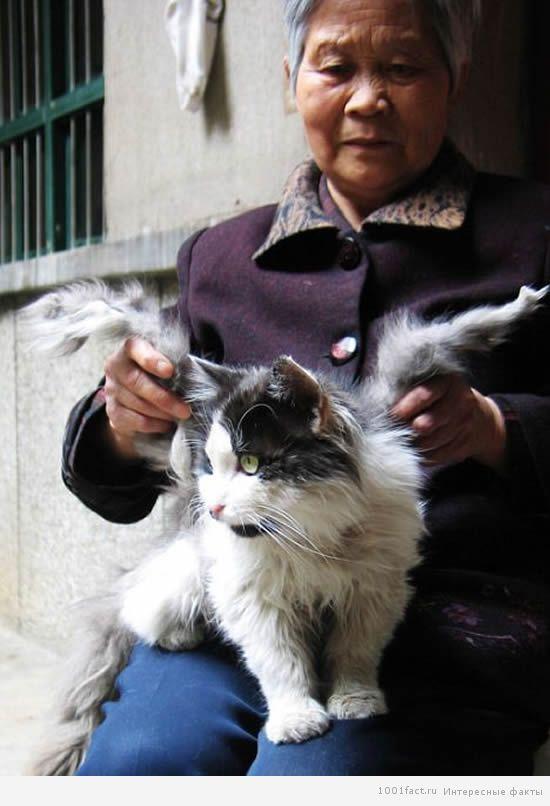 кошка ангел