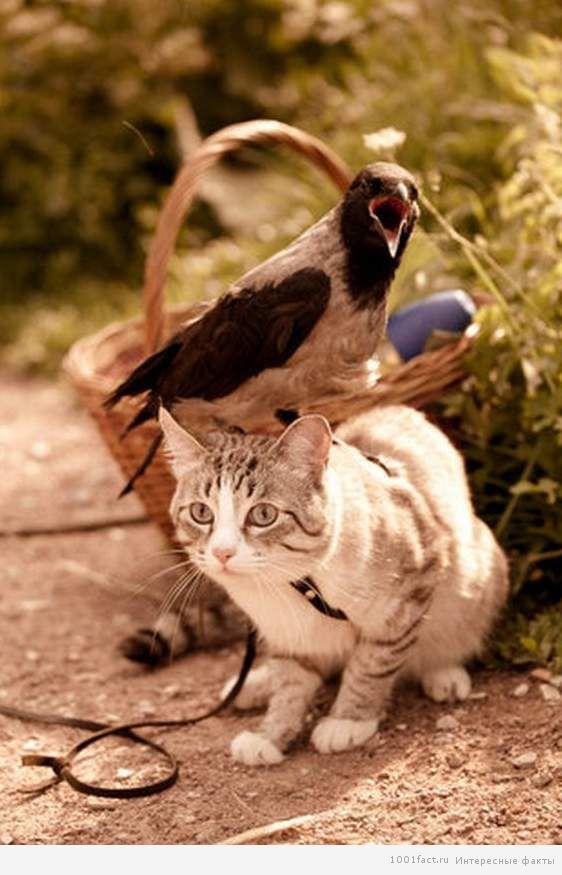 дружба зверей и птиц