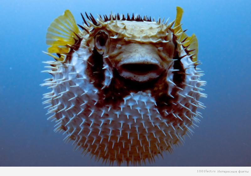 ужасающая рыбка