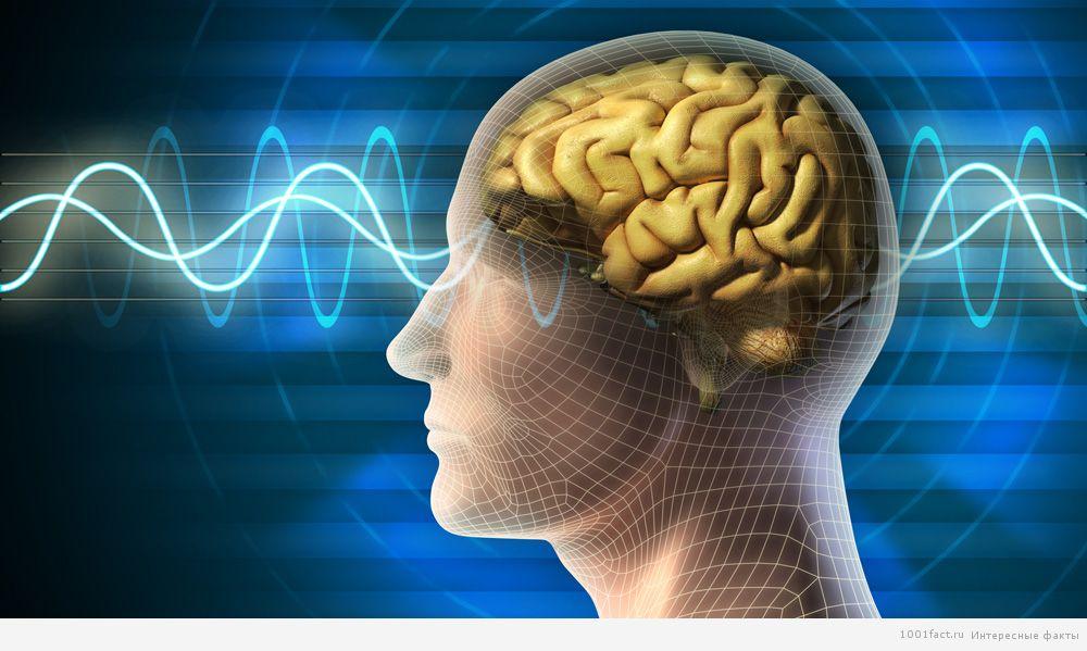 отличие мозга у савантов